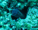 See Moray eels scuba diving in Rhodes